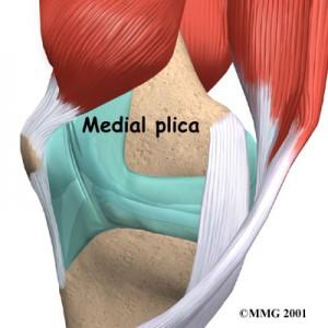 knee_plica_anatomy01